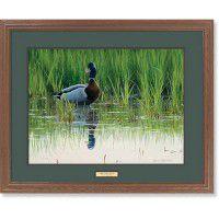 Spring Drake – Mallard Framed Art Print