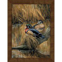 Backwaters Wood Ducks Framed Canvas Print