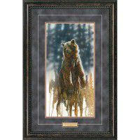 Up Close-Grizzly Bear Framed Print