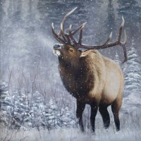 View Corwin Wildlife Paintings 8