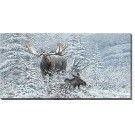 Patient Suitor - Moose Wrapped Canvas