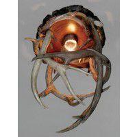 Antler Ceiling Light-Single Light
