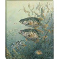 Black Crappies Wrapped Canvas