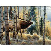 Early Morning Bull - Elk Wrapped Canvas