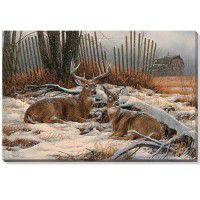 Windbreak Refuge – Whitetail Deer Gallery Wrapped Canvas