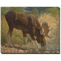 Refreshing - Moose Wrapped Canvas Art